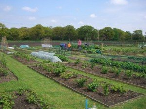 Allotments Goostrey