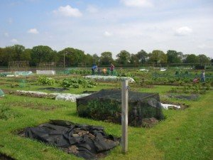 Allotments Holmes Chapel