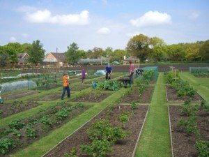 Allotments Sandbach