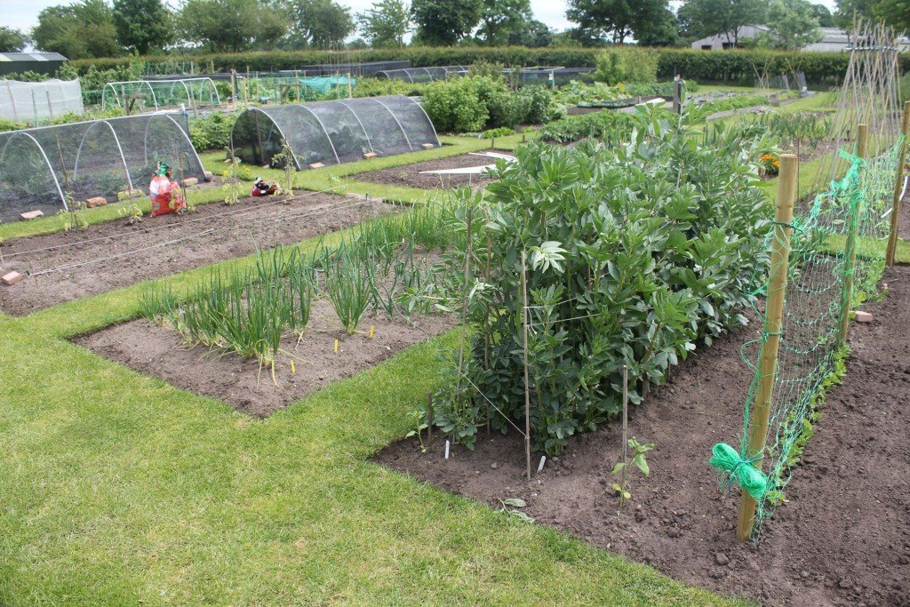 Allotments in Cranage