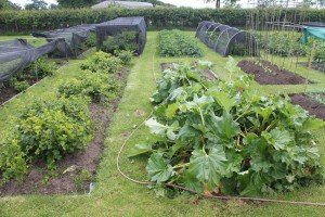 Allotments in Holmes Chapel